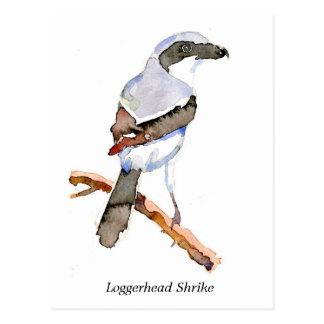 Loggerhead Shrike Postcard