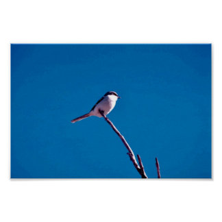 Loggerhead Shrike Print
