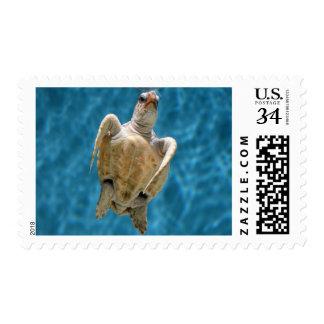 Loggerhead Turtle Stamp Medium Postcard Size