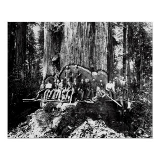 LOGGERS POSE with MONSTER SEQUOIA c. 1883 Poster