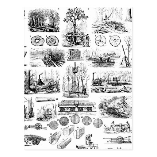 Logging Chart Post Card
