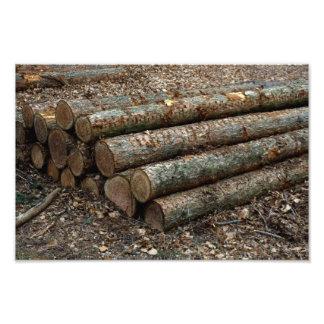 Logging Photo Print