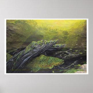 Logjam brown trout poster