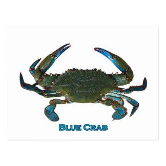 Logotipo atlántico del cangrejo azul tarjeta postal
