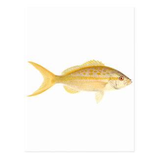 Logotipo de los mordedores de rabo amarillo postales