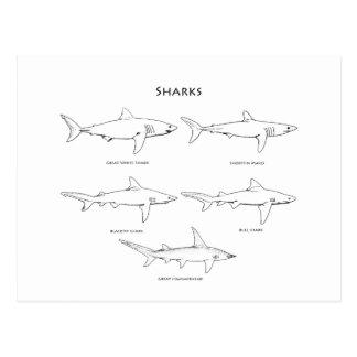 Logotipo de los tiburones (línea arte) postal