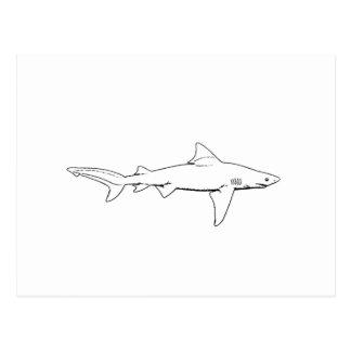 Logotipo del tiburón de Bull (línea arte) Postal