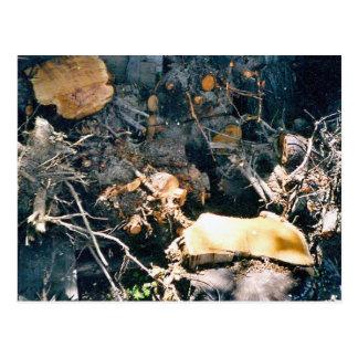 Logs Postcard