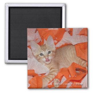 Loki in Orange & White 2 Inch Square Magnet