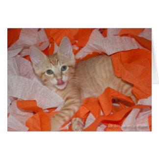 Loki in Orange & White Card