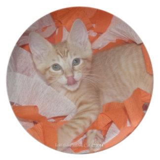 Loki in Orange & White Plate