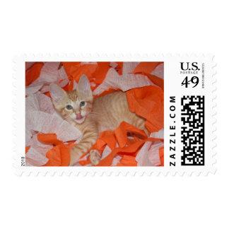 Loki in Orange & White Postage