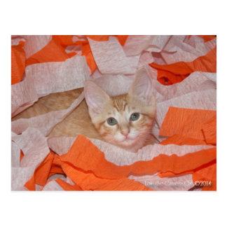 Loki in Orange & White Postcard