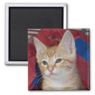 Loki in Red, White & Blue 2 Inch Square Magnet