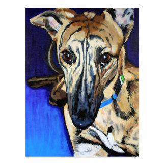 Loki - Lurcher dog Postcard