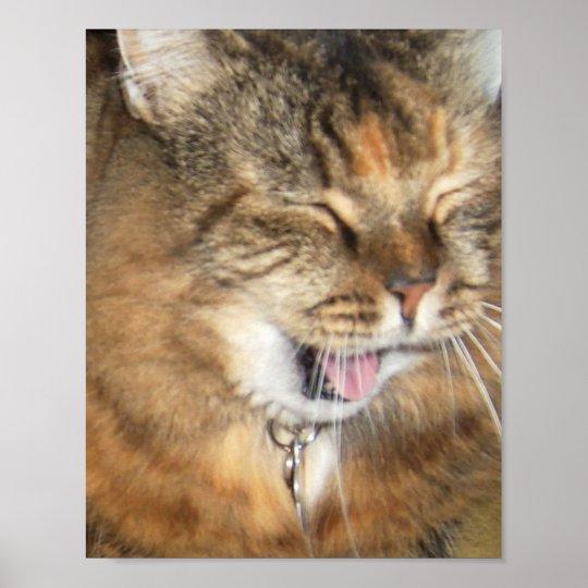 LOL cat Poster