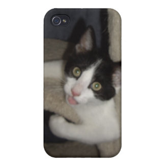 LOL Cats Covers For iPhone 4