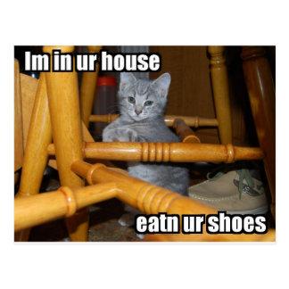 LOL Kitten Postcard
