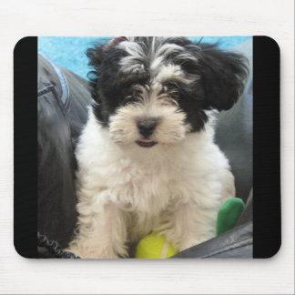 Lola un perrito rescatado de Havanese Tapetes De Ratones