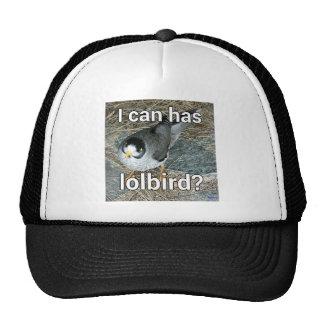 Lolbird Hat