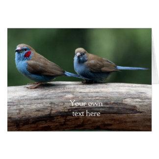 LOLBirds Mr and Mrs Red-Cheeked Cordon Bleu Card