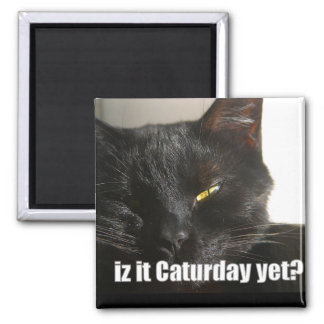 LOLCat 2 2 Inch Square Magnet
