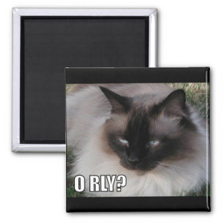 LOLCat 4 2 Inch Square Magnet