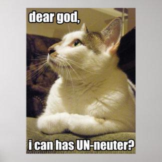 LOLcat - dear god Poster