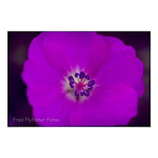 Lomo Flower Poster print