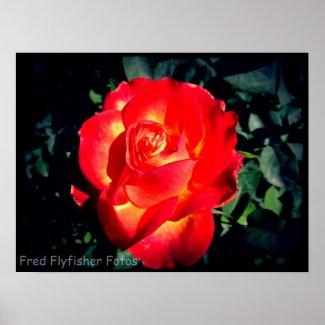 Lomo Rose 3 Poster print