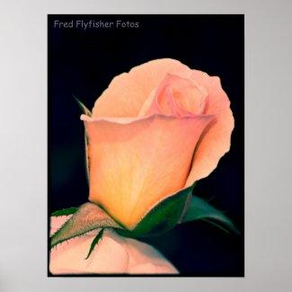 Lomo Rose Poster 2 print