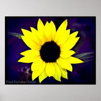 Lomo Sunflower Poster print