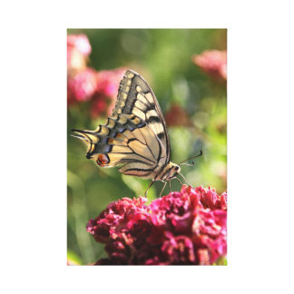 Lona amarilla de la mariposa de Swallowtail Impresiones En Lienzo Estiradas