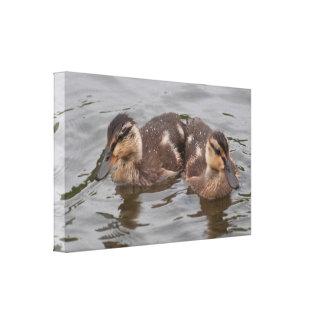 Lona: Anadones del pato silvestre Impresiones En Lona