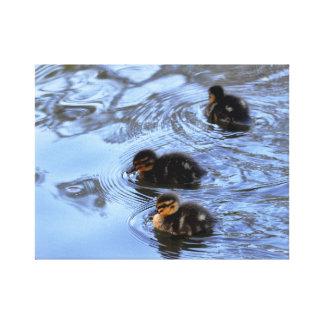 Lona: Anadones del pato silvestre Impresiones En Lienzo Estiradas