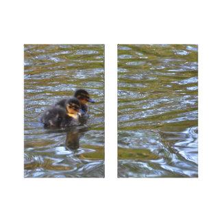 Lona: Anadones del pato silvestre Lona Envuelta Para Galerias