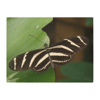 Lona bonita de madera de la mariposa de Longwing Impresión En Madera