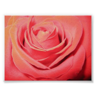 Lona color de rosa hermosa póster