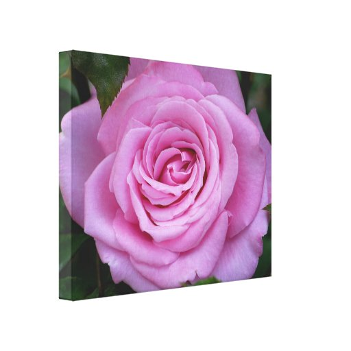 Lona color de rosa rosada de Irina Wardas Lona Envuelta Para Galerias