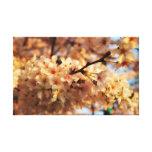 Lona de la flor de cerezo impresión en lienzo estirada