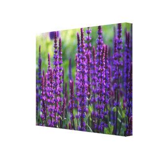 Lona de la foto de la lila de la lavanda lona envuelta para galerías