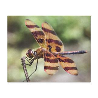 Lona de la libélula del banderín de Halloween Impresión De Lienzo