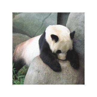 Lona de la panda impresión en lienzo estirada