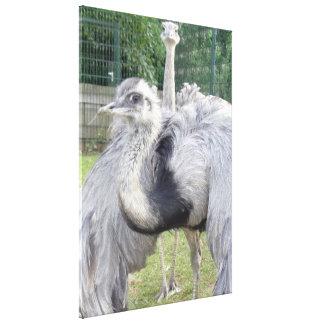 Lona de las avestruces impresiones en lona