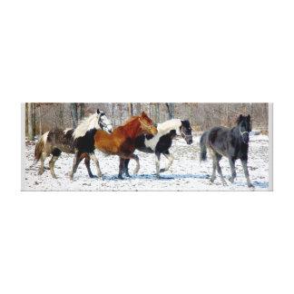 Lona de los caballos salvajes lona estirada galerias