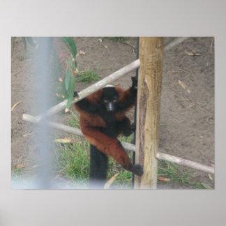 lona de los lemurs 001 posters