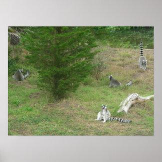lona de los lemurs 002 poster