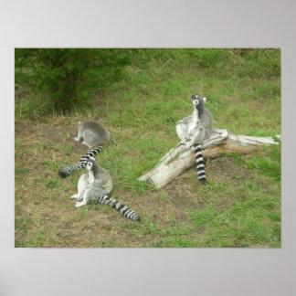 lona de los lemurs 003 posters