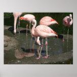 lona de los pájaros 003 poster