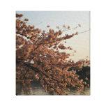 Lona del árbol de la flor de cerezo impresiones de lienzo